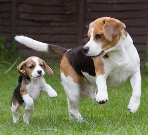 人気犬種ランキング